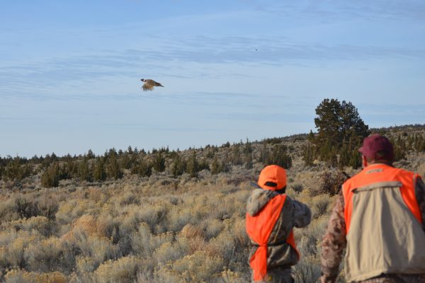 Bend Youth Pheasant HUnt 2017 copy 2