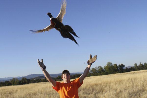TD pheasant release copy
